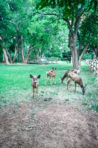 Mule deer at Capitol Reef National Park on northtosouth.us