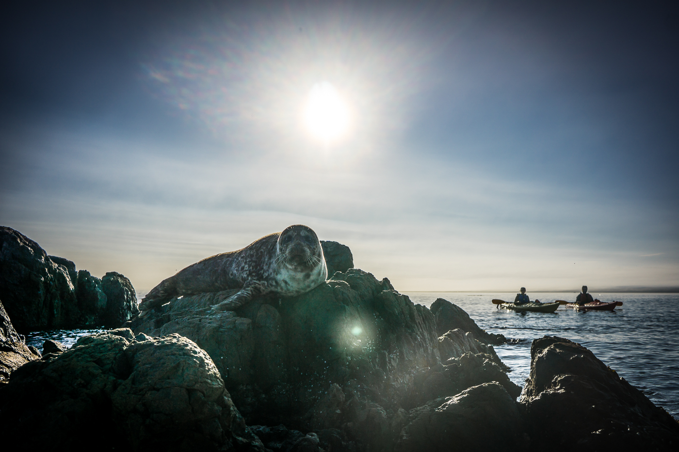 Shot of the Week: Kayak to the Seals of the Brothers Islands