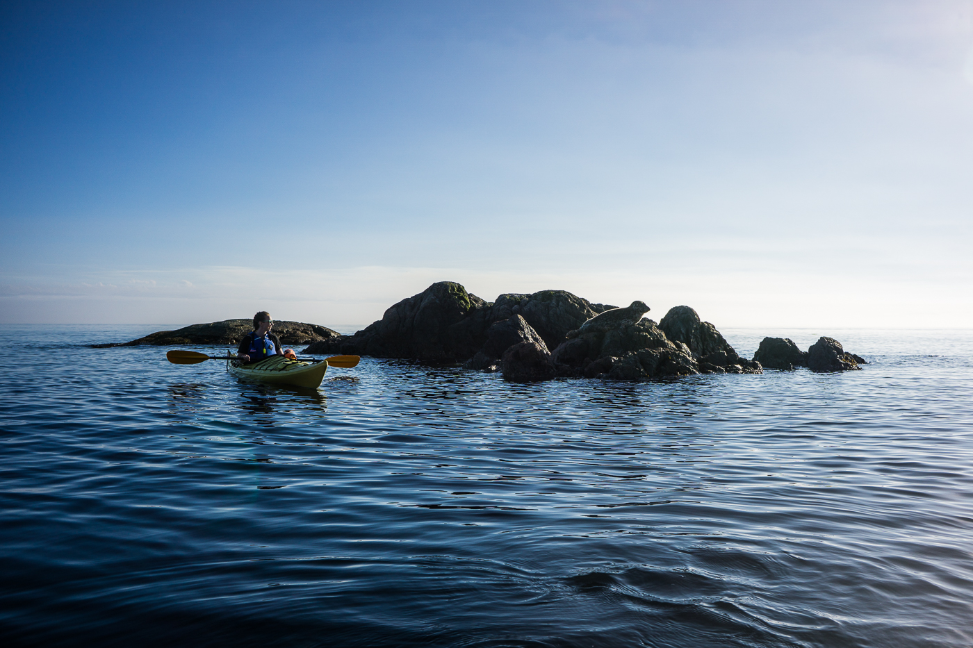 Kayaking to seals in Victoria, British Columbia, Canada