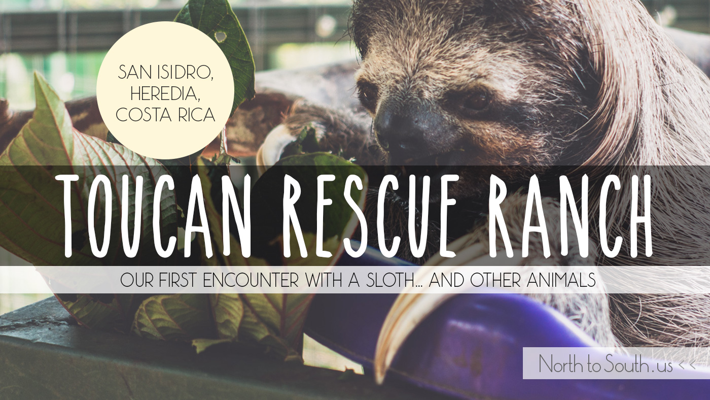 Toucan Rescue Ranch review: our first encounter with a SLOTH... and other animals (San Isidro, Heredia, Costa Rica)