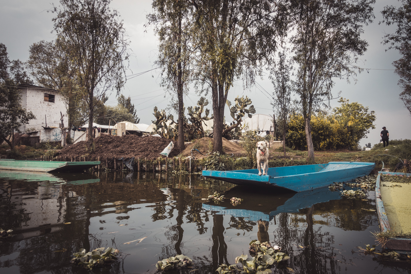 Xochimilco trajineras: dogs on the canal's edge in Mexico City, Mexico