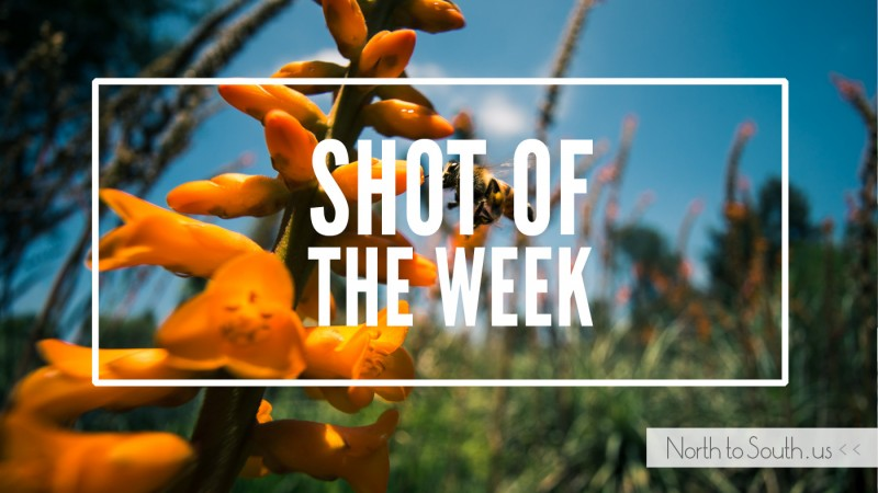 Shot of the Week: Flying Bee and orange flowers at Huntington Botanical Gardens, California, USA