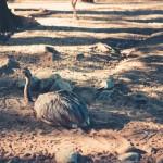 North to South U.S. road trip recap week eighteen | International Zoo