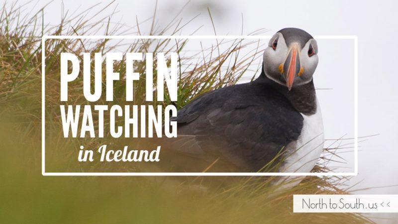Puffin Watching on Iceland's Southern Coast (Dyrhólaey, Iceland)
